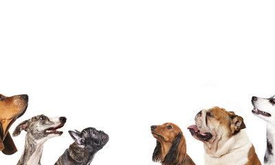 マンションで1階でなら飼育できる犬の種類