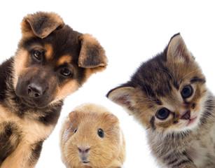 ペットを飼育していたからと言って大家さんから契約解除を一方的にされる場合とはどんな条件下でなのか。