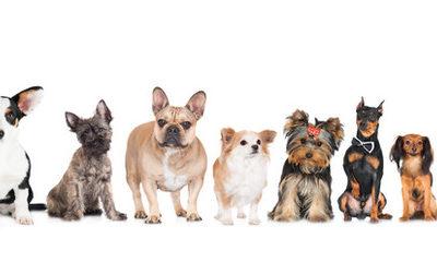 一般的にマンションで飼育可の犬の種類